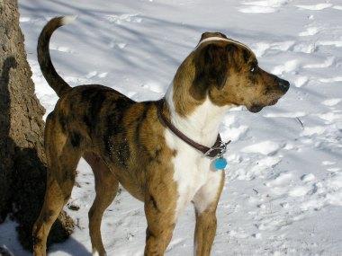 Snow Watch 2009