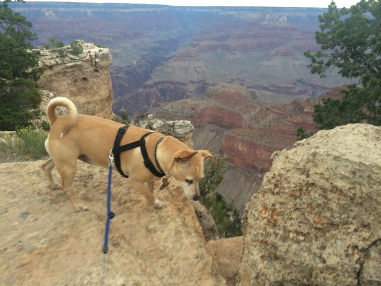 Billy bounces into the Grand Canyon, almost