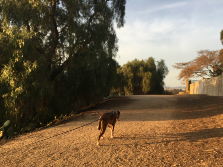 Murphy at 3/4 mile of Yorba Linda Dry Lakebed