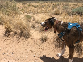 Yes to dogs beware of rattlesnakes!