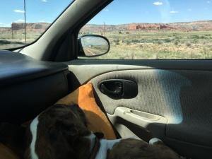 Sleeping Pony on the Hashknife Express Route