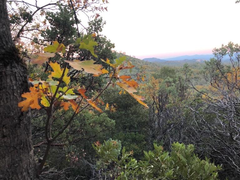 Flanagan Trail